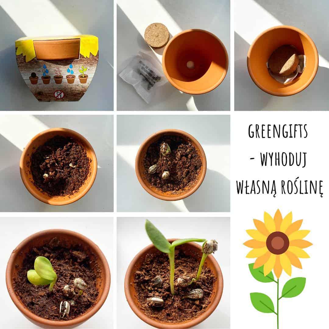 gadżety z nasionami DIY