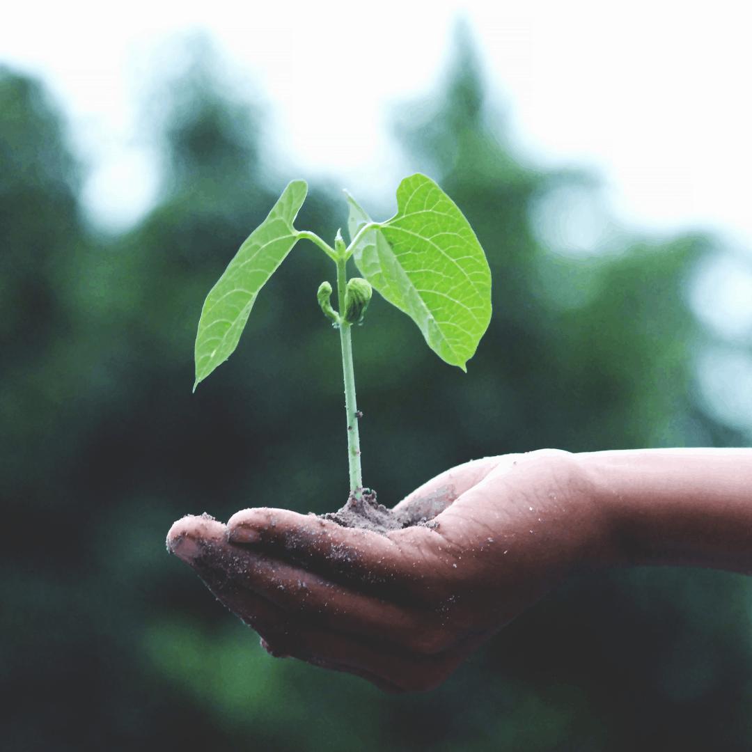 gadżety z nasionami - BAS KREACJA